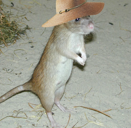 %2BExploratory_behaviour_rat_-rearing.png